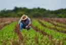 Governo quer que trabalhador rural contribua 5% com a Previdência