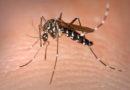 Chikungunya gera doença desconhecida