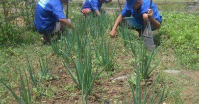 Socioeducandos cultivam hortaliças e plantas medicinais em horta orgânica do Case Vitória